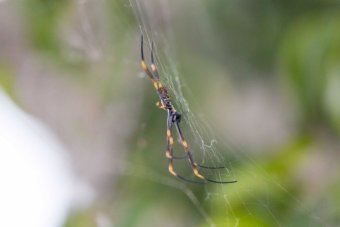 A spider stands on its web within a luscious garden