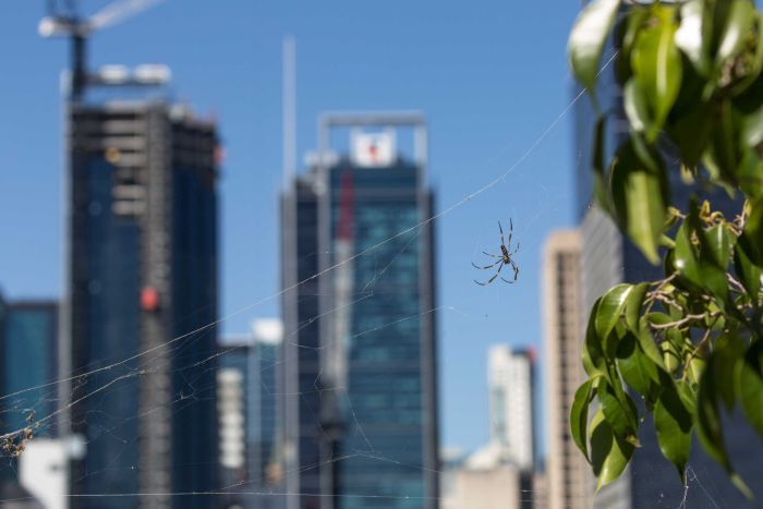A spider stands on its web with a skyline of a city behind.